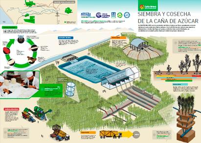 infografia-siembra-cosecha-cana-azucar